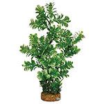 AQ Plant wth A/stone Base 7.1cm(base)x33cm AQ19016