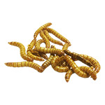 MINI Mealworms (Bag of 250g)