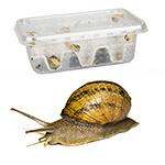 Snails Pre-Pack, 8 x Medium