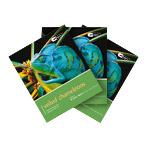 Pet Expert BUNDLE 2+1 Veiled Chameleons (3)