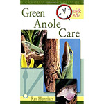 *QE406 Green Anole Care