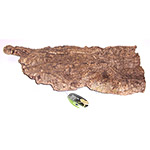 PR Cork Bark Flat, X-Large
