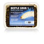 PR Beetle Grub (Type A)