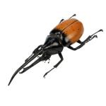 Blue Bug Magnet, Hercules Beetle in tub