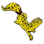 Blue Bug Pin Badge, Leopard Gecko