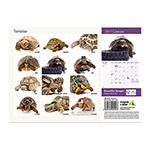 *Calendar 2017 A4; Tortoise