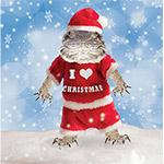 PR Christmas Cards (Pk10) B.Dragon Santa
