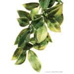 ET Plastic Plant Mandarin Medium, PT3012