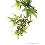 ET Plastic Plant Croton Large, PT3020