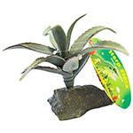 LR Agave medium approx 15cm IF-85