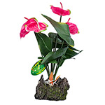 LR Anthurium Pink 50cm IF-32