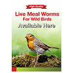 PL A3 Poster: Live Mealworms Available