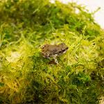 CB Colorado River Toad